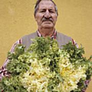 Lettuce Harvest Art Print