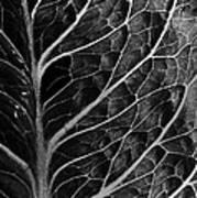 Lettuce Leaf Art Print