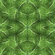 Lettuce Live Green  Art Print