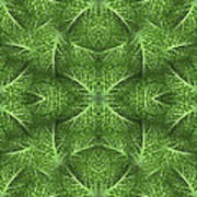 Lettuce Live Green  Art Print by Sue Duda