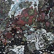 Lichen Abstract II Art Print