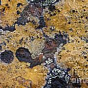 Lichen Pattern Series - 10 Art Print