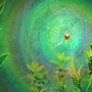 Lightning Spider Art Print