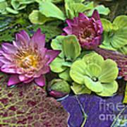 Lilies No. 33 Print by Anne Klar