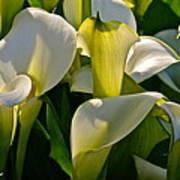 Lilies Of The Nile Art Print