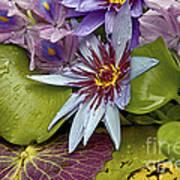Lillies No. 9 Art Print by Anne Klar