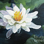 Lily In Water 2 Art Print