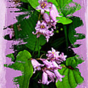 Lily Of The Valley - In The Pink #1 Art Print