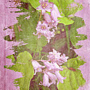 Lily Of The Valley - In The Pink #3 Art Print