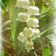 Lily Of The Valley - In White #2 Art Print