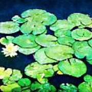 Lily Pads And Lotus Art Print