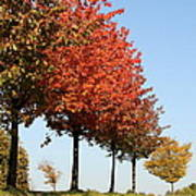 Line Of Autumn Trees Art Print