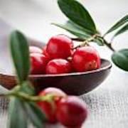 Lingonberries Art Print