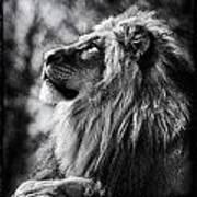 Lion Meditating Art Print
