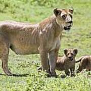 Lioness With Cubs Art Print by Carson Ganci