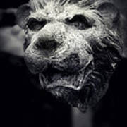 Lions Head 2 Art Print