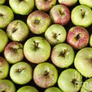 Little Green Apples Art Print