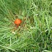 Little Orange Mushroom Art Print