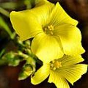 Little Yellow Flower Art Print