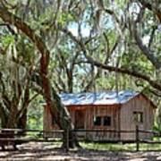 Live Oak Cabin Art Print by Bob Jackson
