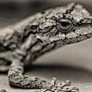 Lizard In Bw Art Print