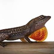 Lizard Portrait Art Print