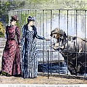 London Zoo, 1891 Art Print