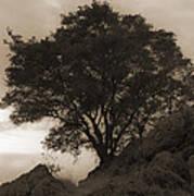 Lone Oak 2 Sepia Art Print