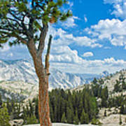 Lone Pine At Half Dome Art Print