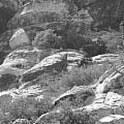 Lone Ram At Red Rock Canyon Art Print
