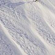 Lone Tree On Mount Hood In Winter Mount Art Print