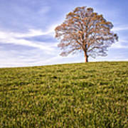 Lone Tree On The Hill Colour Art Print