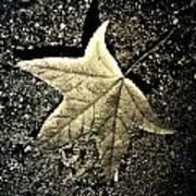 Lonely Leaf Art Print
