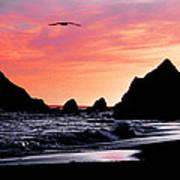 Lonesome Gull Art Print