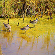 Long Billed Dowitchers Migrating Art Print