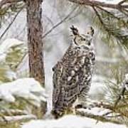 Long Eared Owl Art Print