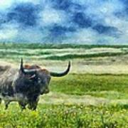 Longhorn Prarie Art Print by Jeff Kolker