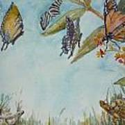 Look A Turtle Art Print by Dorothy Herron