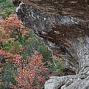Lost Maples Fall Scene Art Print