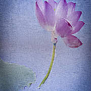 Lotus Dream Art Print by Jill Balsam