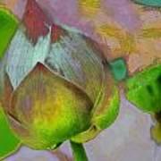 Lotus Dreaming 1 Art Print