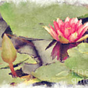Lotus Flower12 Art Print