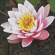 Lotus In The Rain 3 Art Print