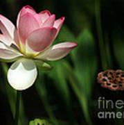Lotus Opening To The Sun Art Print