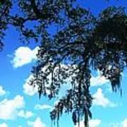 Louisiana Skyscape Art Print