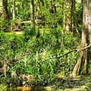 Louisiana Wetland Art Print