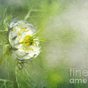 Love In A Mist Floral Art Print
