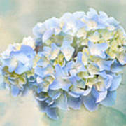Love Letter Vii Hydrangea Art Print by Jai Johnson