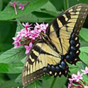 Lovely Butterfly Art Print