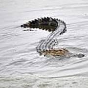 Low Country Marsh Alligator Art Print